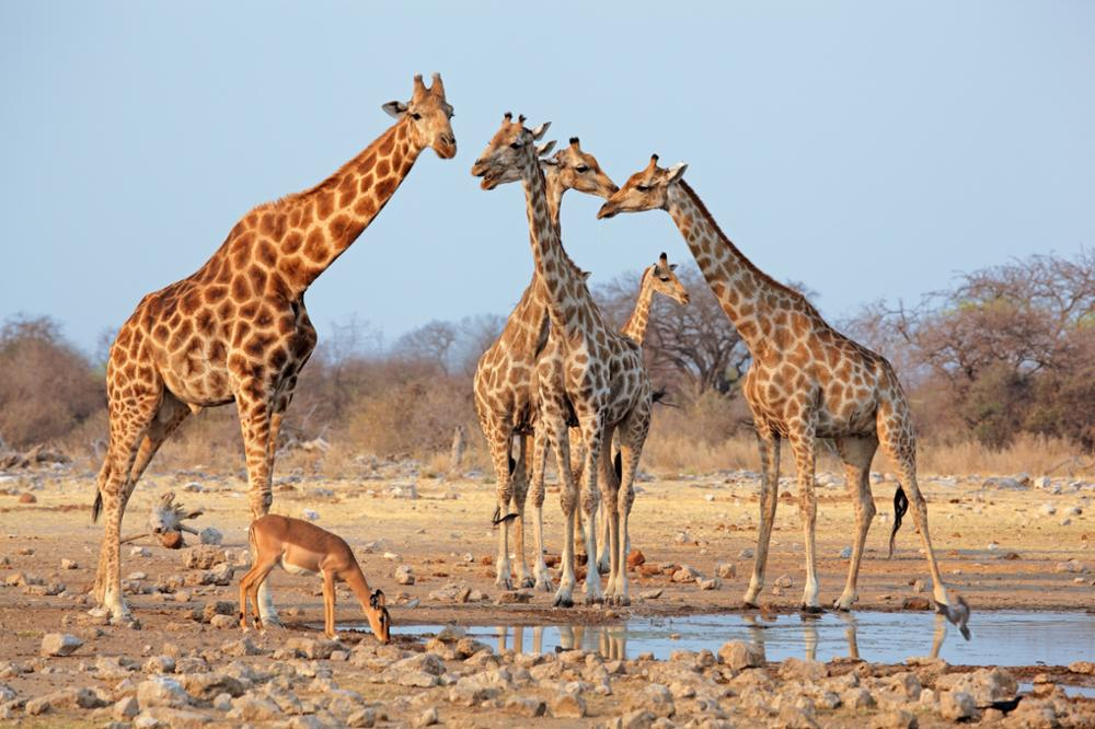 Les plus beaux safaris à faire en Namibie